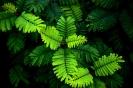 greenmass_4